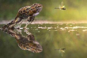 Những pha hành động hoàn hảo của động vật