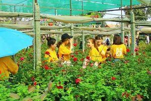 'Ngất ngây' với vườn hoa hồng Pháp tuyệt đẹp được tham quan miễn phí dịp Tết