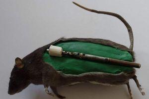 Tiết lộ chấn động về bom chuột hủy diệt khủng khiếp Thế chiến II
