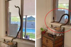 Phát hiện rắn chui vào nhà vì quên đóng cửa