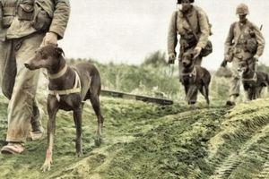 Quân đội hai nước lao vào đánh nhau chỉ vì... một con chó