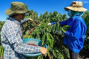 Cà phê Việt Nam tiếp tục chinh phục thế giới