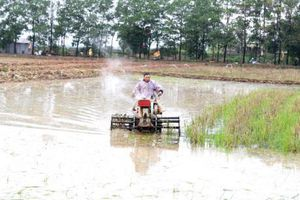 Trên 95% diện tích Trung du và Đồng bằng Bắc bộ có nước gieo cấy