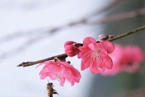 Lắng nghe mùa xuân về