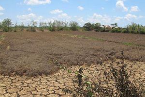 Bắc Bộ thiếu nước, Nam Bộ bị xâm nhập mặn nghiêm trọng