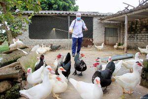 Quảng Ninh, Hải Phòng chủ động phòng chống dịch cúm gia cầm