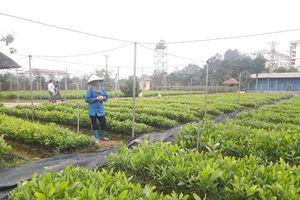 Quản lý hiệu quả giống cây trồng lâm nghiệp