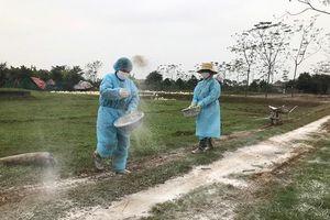 Tiêu hủy, chặn đứng ngay dịch cúm gia cầm H5N6