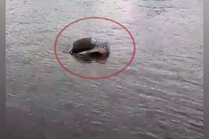 Tài xế bất lực nhìn chiếc BMW chìm xuống sông