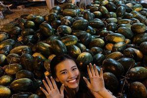Danh hài Thúy Nga bị trộm, sao Việt mua dưa hấu, quà Valentine