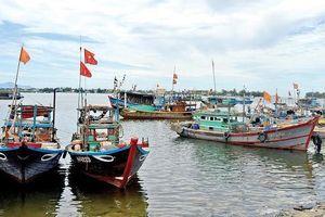 Đà Nẵng không có tàu cá vi phạm vùng biển nước ngoài