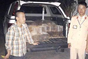 Nghệ An: CSGT 'tóm gọn' xe bán tải chở 60 cá thể dúi trong đêm đang đi tiêu thụ