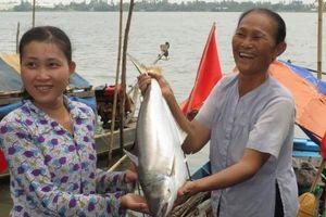 Mùa cá bông lau ở cù lao Tân Lộc