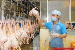 Thịt heo, thịt gà đồng loạt rớt giá vì ảnh hưởng dịch CoVid- 19