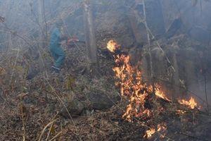 Bà Rịa – Vũng Tàu: Chữa cháy rừng, phát hiện thi thể đang phân hủy