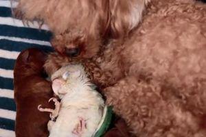 Tình bạn đáng yêu 'ăn cùng, ngủ cùng nhau' của chim và chó con