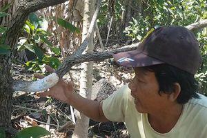 Đồng Nai: Hàng trăm cây bơ bị hạ độc