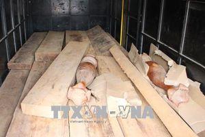 'Ngụy trang' gỗ lậu trên xe chở sắt phế liệu