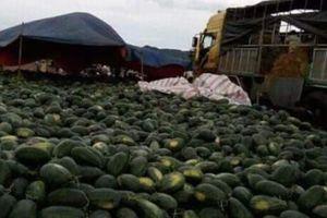 Gia Lai: 'Giải cứu' hơn 3 nghìn tấn dưa hấu cho người dân
