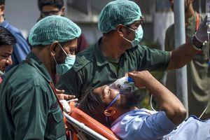 Bụi đậu nành – Thủ phạm khiến 14 người Pakistan chết bí ẩn
