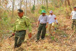 Hàng ngàn hecta rừng vùng Bảy Núi (An Giang) đứng trước nguy cơ cháy lớn