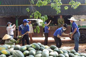 Kon Tum đã giải cứu 500 tấn dưa hấu