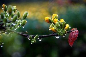 'Mùa xuân nho nhỏ': Gieo những hạt giống của lẽ sống đẹp