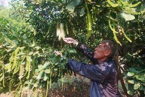 Lai Châu: Trở thành tỷ phú từ trồng cây mắc ca