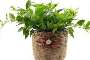 Âm thầm trồng cây này trong nhà, Thần Tài 'gật gù' ưng ý, 'tiền đè ngạt thở'
