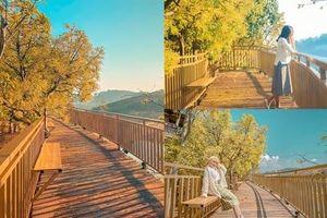 Đà Lạt đẹp lịm tim với 'con đường Hàn Quốc'