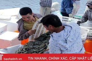 Ảnh hưởng dịch Covid - 19, đầu ra tôm nuôi Hà Tĩnh gặp khó