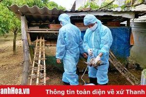 Tập trung hoàn thành công tác tiêm vắc xin phòng chống cúm gia cầm đợt I năm 2020