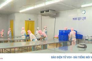 Ngành Thủy sản Phú Yên thiếu nguyên liệu chế biến trầm trọng