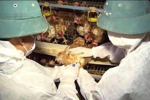 Hà Tĩnh: Đề phòng găm hàng, tăng giá thuốc thú y