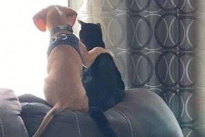 Đôi bạn thân chó và mèo 'khoác vai nhau' ngồi ngắm cảnh qua khung cửa