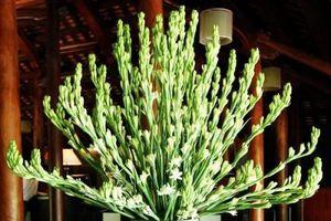 Ngày rằm: Bắt buộc phải đặt loại hoa này lên bàn thờ nếu muốn 'thức tỉnh' Thần Tài, đầu tư 'bách phát trúng'