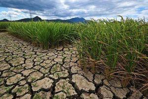 Trung Bộ có nguy cơ khô hạn, xâm nhập mặn