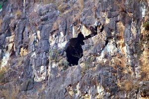Sơn La giải cứu 4 người bị mắc kẹt tại hang đá Núi Hài