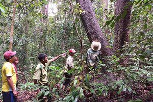 Vườn quốc gia Chư Mom Ray: Tăng cường công tác phòng cháy chữa cháy rừng