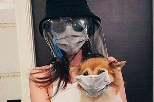 Chuyện showbiz: Hoa hậu Khánh Vân đeo khẩu trang cho chó cưng