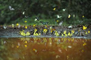 Thế giới tự nhiên qua ống kính macro