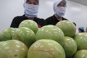Xuất khẩu nông sản tìm cách hồi phục