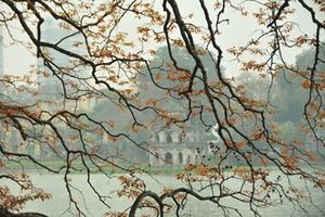 Hà Nội mùa cây thay lá