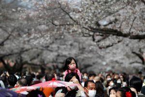 Bất chấp dịch Covid-19, hàng nghìn người Nhật đổ xô đi ngắm hoa anh đào