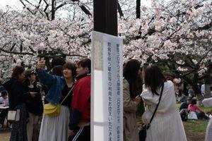 Phớt lờ cảnh báo dịch COVID-19, người Nhật Bản đổ xô đi ngắm hoa anh đào