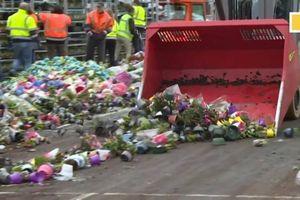 Nông dân Hà Lan gạt nước mắt tiêu hủy hàng nghìn loại hoa vì Covid-19