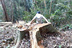 Ai đang giấu kết quả kiểm tra vụ phá rừng phòng hộ đầu nguồn Gia Lai?