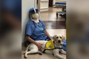 Chú chó mang lại niềm vui cho các bác sĩ tuyến đầu chống Covid-19 ở Mỹ