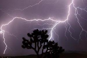 Đứng trú mưa dưới gốc cây, con bị sét đánh tử vong, cha bị thương