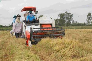 Vai trò đảm bảo an ninh lương thực của Đồng bằng sông Cửu Long